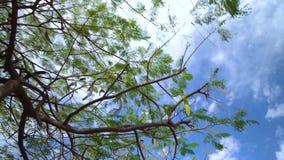 Marche sous les arbres de Plam chez Ténérife clips vidéos