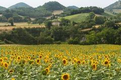 Marcheert: het landschap van het land Royalty-vrije Stock Fotografie