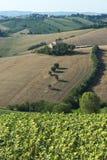 Marcheert (Italië): de zomerlandschap Royalty-vrije Stock Afbeeldingen