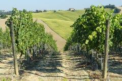 Marcheert (Italië): de zomerlandschap Stock Afbeelding