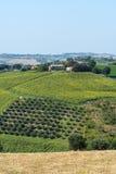 Marcheert (Italië): de zomerlandschap Royalty-vrije Stock Fotografie