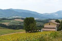 Marcheert (Italië): de zomerlandschap Royalty-vrije Stock Afbeelding