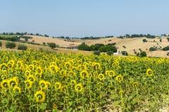 Marcheert (Italië): de zomerlandschap Royalty-vrije Stock Foto