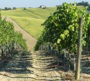 Marcheert (Italië): de zomerlandschap Stock Afbeeldingen