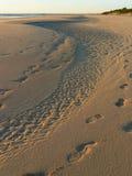 Marchepieds dans le sable Image stock