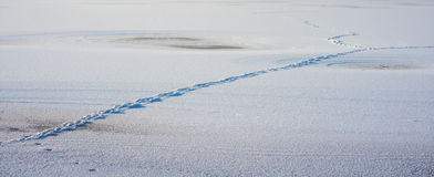 Marchepieds sur la neige images stock