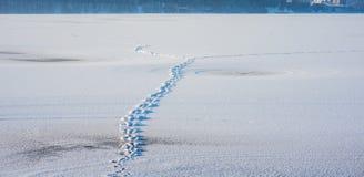 Marchepieds sur la neige photo libre de droits