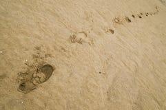 Marchepieds sur le sable Image libre de droits