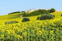 Marches (Italie) : paysage d'été Image stock