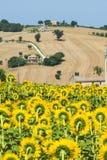 Marches (Italie) : paysage d'été Photographie stock libre de droits