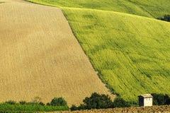 Marches (Italie) : paysage d'été Image libre de droits