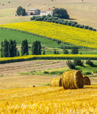Marches (Italy) - Farm. Marches (Italy) - Landscape at summer near Jesi, typical farm Royalty Free Stock Images