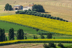 Marches (Italy) - Farm. Marches (Italy) - Landscape at summer near Jesi, typical farm Stock Photo