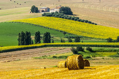 Marches (Italy) - Farm. Marches (Italy) - Landscape at summer near Jesi, typical farm Stock Image