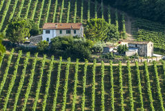 Marches (Italy) - Farm. Marches (Italy) - Landscape at summer near Jesi, typical farm Royalty Free Stock Photography