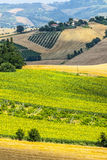 Marches (Italy), landscape Royalty Free Stock Photography
