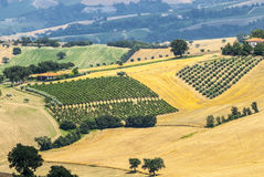 Marches (Italy), landscape. Marches (Italy) - Panoramic view near Arcevia at summer Royalty Free Stock Photography