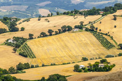 Marches (Italy), landscape. Marches (Italy) - Panoramic view near Arcevia at summer Stock Image