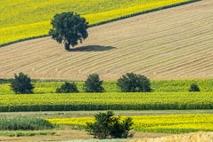 Marches (Italy), landscape. Marches (Italy) - Landscape at summer near Jesi Royalty Free Stock Photo