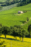 Marches (Italy), landscape. Marches (Italy) - Landscape at summer near Jesi Stock Photography