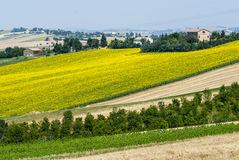 Marches (Italy), landscape. Jesi - Cingoli (Macerata, Marche, Italy) - Landscape at summer, with sunflowers Stock Photo