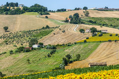 Marches (Italy), landscape. Marches (Italy) - Landscape at summer near Cingoli Royalty Free Stock Photos