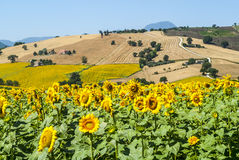 Marches (Italy), landscape. Marches (Italy) - Landscape at summer near Cingoli Royalty Free Stock Images