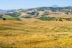 Marches (Italy), landscape. Marches (Italy) - Landscape at summer near Cingoli Royalty Free Stock Image