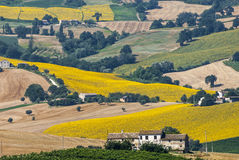 Marches (Italy) - Landscape. At summer near Cingoli Royalty Free Stock Photo