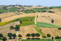 Marches (Italy) - Landscape. Region between Montecassiano and Montefano, near Macerata (Marches, Italy) - Landscape at summer Stock Photography