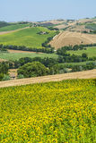 Marches (Italy) - Landscape. Region between Montecassiano and Montefano, near Macerata (Marches, Italy) - Landscape at summer Stock Images