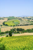 Marches (Italy) - Landscape. Region between Montecassiano and Montefano, near Macerata (Marches, Italy) - Landscape at summer Royalty Free Stock Image