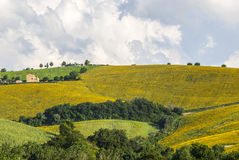 Marches (Italy), Landscape Stock Photos
