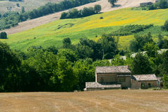 Marches (Italy) - Landscape at summer. Farm stock photos