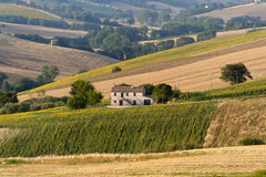 Marches (Italy) - Landscape at summer. Farm stock photography