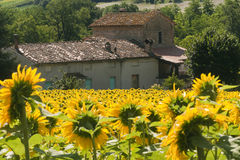 Marches (Italy) - Landscape at summer. Farm Royalty Free Stock Images