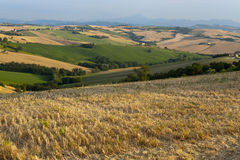 Marches (Italy) - Landscape at summer. Near Ancona Royalty Free Stock Images