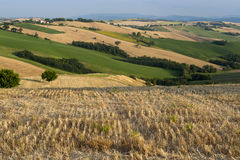 Marches (Italy) - Landscape at summer. Near Ancona Stock Image