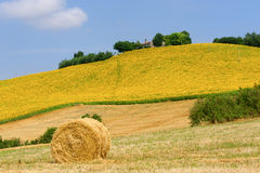 Marches (Italy) - Landscape at summer. Farm Royalty Free Stock Photos