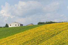 Marches (Italy) - Landscape at summer. Farm Royalty Free Stock Photo