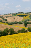 Marches (Italy), Landscape at summer Stock Photos