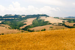 Marches (Italy) - Landscape at summer. Near Ancona Royalty Free Stock Photo