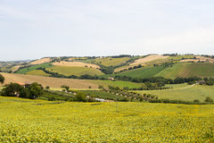 Marches (Italy) - Landscape at summer Stock Photo