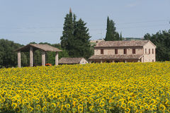 Marches (Italy) - Landscape at summer. With sunflowers, farm Stock Image