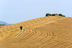 Marches (Italy) - Landscape at summer, farm. And path Royalty Free Stock Images