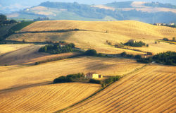 Marches (Italy) - Landscape at summer, farm Stock Images