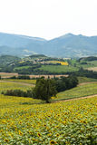 Marches (Italy): summer landscape Stock Image