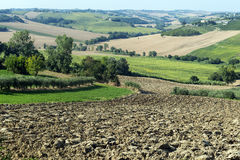 Marches (Italy): summer landscape Royalty Free Stock Photos