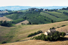 Marches (Italy): summer landscape Royalty Free Stock Images