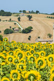 Marches (Italy): summer landscape Royalty Free Stock Photography